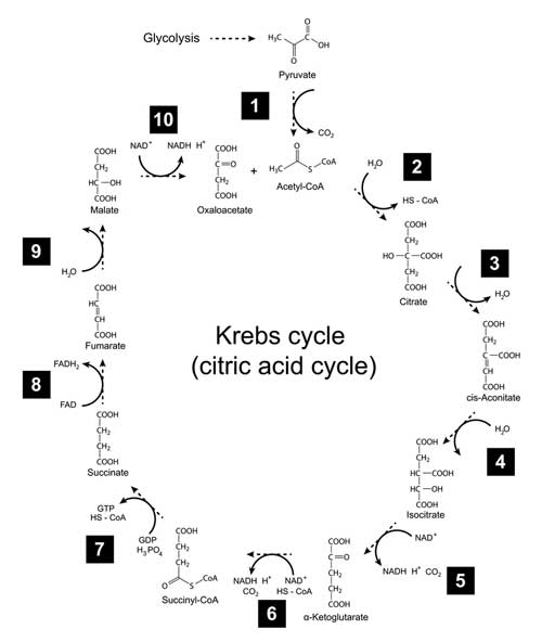 metabolic toxins